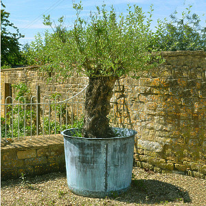 The Circular Copper Garden Planter - Very Large