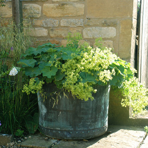 The Circular Copper Garden Planter - Medium